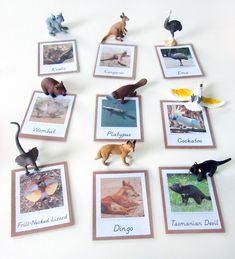 Will print these cards for camp Animals of Australia for the Montessori Wall Map & Quietbook with Printables from Imagine Our Life Australia For Kids, Australia Animals, Australia Crafts, Animal Activities, Infant Activities, Geography Activities, Animal Science, Australia Continent, Aboriginal Map Of Australia