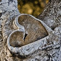 Finding beauty in nature. Love this heart in tree! I Love Heart, With All My Heart, Happy Heart, My Love, Heart In Nature, Heart Art, Nature Nature, Broken Heart Pictures, In Natura