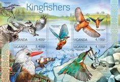2012 Fauna - Kingfishers 30. March WM: None