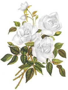 NeW! WHiTe GarDeN TeA RoSeS ShaBby WaTerSLiDe DeCALs in Tole Decals & Transfers | eBay