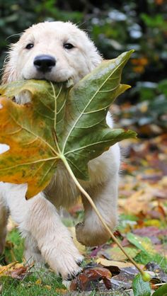 A very Beautiful Dog's Gallery | Take a Quick Break