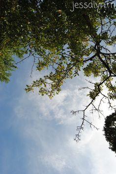 tree ~ jessalyn.m