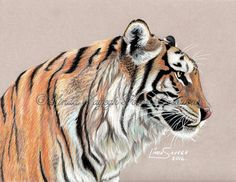 Tiger Tiger by Artsy50.deviantart.com on @DeviantArt
