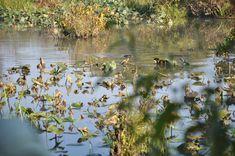 Julie Metz Wetlands, Woodbridge