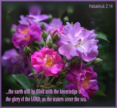 Habakkuk 2:14  ...The Earth will be filled with the knowledge of the glory of the Lord, as the waters cover the sea.