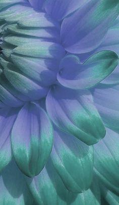 * Turquoise