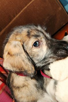<3 irish #wolfhound Irish Wolfhound Puppies, Irish Wolfhounds, Big Dogs, Cute Dogs, Bedlington Whippet, Pet Turkey, Scottish Deerhound, Dog Lady, Baby Puppies