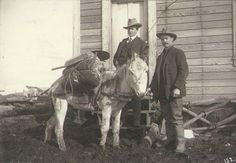 Two prospectors standing in front of building with donkey loaded with gold mining pan,   shovel and other supplies, vicinity of Nome, Alaska, ca. 1900. PhotographerHester,   Wilhelm, 1872-1947. Wilhelm Hester Photograph Collection. PH Coll 318.     University of   Washington Libraries. Special Collections Division, Seattle, WA 98195-2900 (USA).