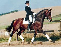 Rambo, Danish Warmblood stallion