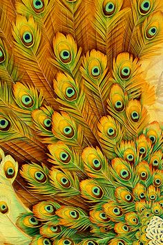 Yellow peacock