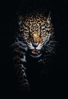 The Jaguar - Animals - - wild. Jaguar Wallpaper, Leopard Wallpaper, Animal Wallpaper, Beautiful Cats, Animals Beautiful, Beautiful Pictures, Jaguar Tier, Jaguar Tattoo, Animals And Pets
