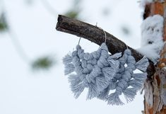 Pohjola -korvakorut - EKOTAR Design Moth, Dandelion, Insects, Flowers, Plants, Animals, Design, Animales, Animaux