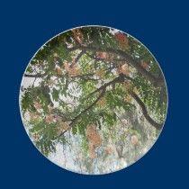 Shower Tree plate