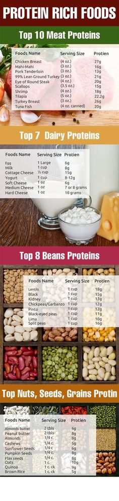 Highest Protein Rich Foods
