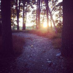 Epic sunsets mountain biking.