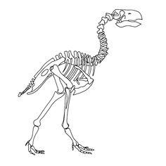 dino skelet kleurplaat - Google zoeken