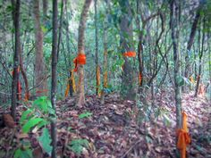 Chaing mai: hike to wat palat. start at the top of suthep rd and follow a trail up to the hidden temple on doi suthep called wat palat. There are scraps of monks robes tied around trees up the path