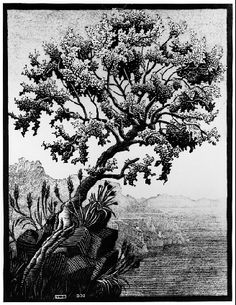 "M.C. Escher- ""Carubba Tree,(Ravello)- February 1932, Woodcut in black and grey, printed from two blocks."