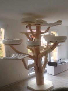 MAINE COON World - natural scratching trees - Main-Coon-Katze - Katzenbilder Diy Cat Tree, Cat Playground, Cat Shelves, Bathroom Shelves, Cat Enclosure, Cat Condo, Cat Room, Pet Furniture, Cat Accessories