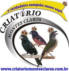 Criatório Montes Claros - Montes Claros/MG - criatoriomontesclaros.com.br
