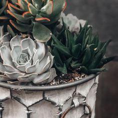Natalie Linda (@itsnatalielinda) • Instagram photos and videos How To Water Succulents, Propagating Succulents, Growing Succulents, Succulent Gardening, Succulent Care, Growing Plants, Planting Succulents, Succulent Plants, Indoor Gardening