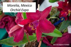 #Morelia, #Mexico #Orchid Expo with my #homeschooling girls at Los Gringos Locos