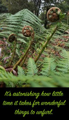 Fern Frond, Tree Fern, Holiday Apartments, New Growth, Garden Photos, Romantic Couples, Spring Garden, Emerald, Bloom
