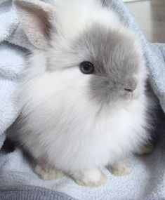 #Bunnies #Rabbits #Animals