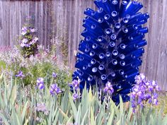 Blue bottle Hyacinth