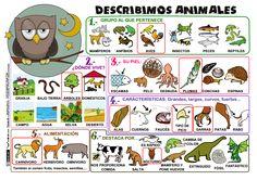Mural para describir animales. http://www.actiludis.com/wp-content/uploads/2013/05/Describir-Animales.pdf