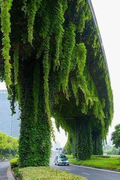 Vertical Garden on a over pass. : BeAmazed