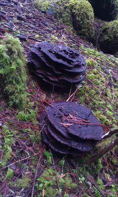 Interesting fungi?