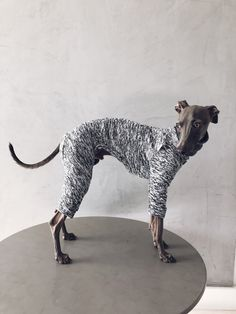 italian greyhound and whippet clothes / iggy clothes / Dog Sweater / ropa para galgo italiano y whippet/ GRAY JUMPSUIT Underwear, Italian Greyhound, Whippet, Spring, Giraffe, Stripes, Warm, Etsy, This Or That Questions
