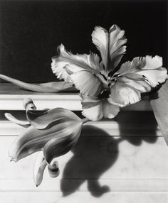 By Horst P. Horst (1906-1999), 1989, Tulips, Oyster Bay, Long Island.