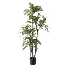 Artificial plant, 5' draceana fragans