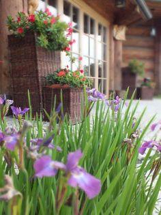Nasze kwiaty:) #garden #hotel #flowers