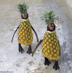 Pineapple Penguins