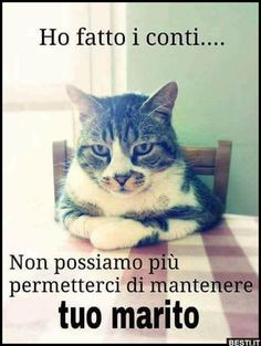 Vignette con i Gatti per Whatsapp - IMG I Love Cats, Cute Cats, Funny Cats, Animals And Pets, Funny Animals, Cute Animals, Funny Images, Funny Photos, Italian Memes