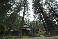 enjoy vacation with us in Manali India