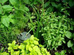 Herbs in the garden...