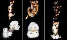 Pooches as you've never seen them pictured from the paws up