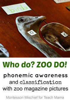 beginning sounds & phonemic awareness and classification with zoo magazine pictures | guest post by @Aubrey Godden @ Montessori Mischief on @Amy Lyons mascott @amy mascott @teachmama #weteach