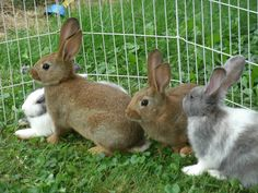 Rabbits As Pets Best Breeds Cool Pets, Face, Animals, Rabbits, Animaux, Animal, Rabbit, Animales, Faces