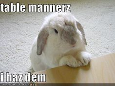 Your daily funny bunny:-)      We would LOVE to feed your pets!   Click -> http://www.smallpetselect... pinned with Pinvolve