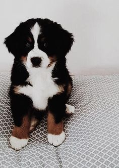 Berner Sennenhund Welpe The Effective Pictures We Offer You About Cutest Baby Animals in the world A Cute Little Animals, Cute Funny Animals, Funny Dogs, Cute Dogs And Puppies, I Love Dogs, Doggies, Baby Puppies, Baby Animals Pictures, Cute Creatures