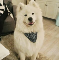 And with big floofy dogs who will always be happy to see you. | 25 Tiny Things To Make You Smile When You Really Need It