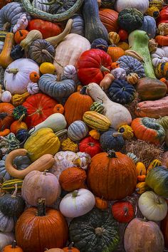 Heirloom Harvest Art Print by Garry Gay. All prints are professionally printed, packaged, and shipped within 3 - 4 business days. Choose from multiple sizes and hundreds of frame and mat options. Pumpkin Wallpaper, Fall Wallpaper, Pumpkin Art, Pumpkin Colors, Autumn Aesthetic, Fall Photos, Fall Pics, Fall Images, Autumn Photography