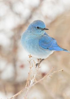 Types Of Cute And Small Birds - What is the smallest bird in the world? Cute and small birds are one of the most interesting creatures on Earth. Pretty Birds, Love Birds, Beautiful Birds, Animals Beautiful, Small Birds, Colorful Birds, Little Birds, Nature Animals, Animals And Pets