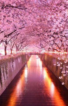 Wisteria Flower Tunnel in Tochigi, Japan. I'll get to Japan someday #hooladayfavourites