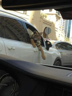 Just an average day in Dubai traffic....